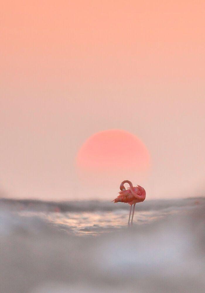 Фламінго на фоні рожевого заходу сонця