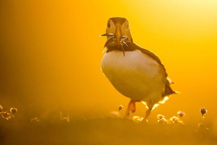 Птах зібрав хмиз, щоб перекусити