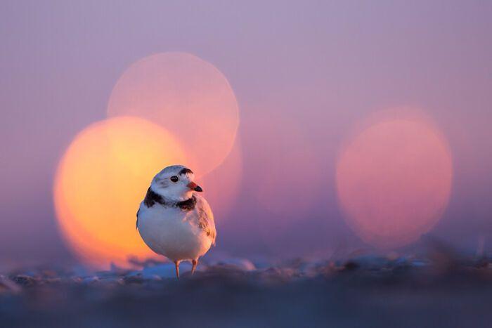 Фотограф зафільмував крихітного птаха крупним планом