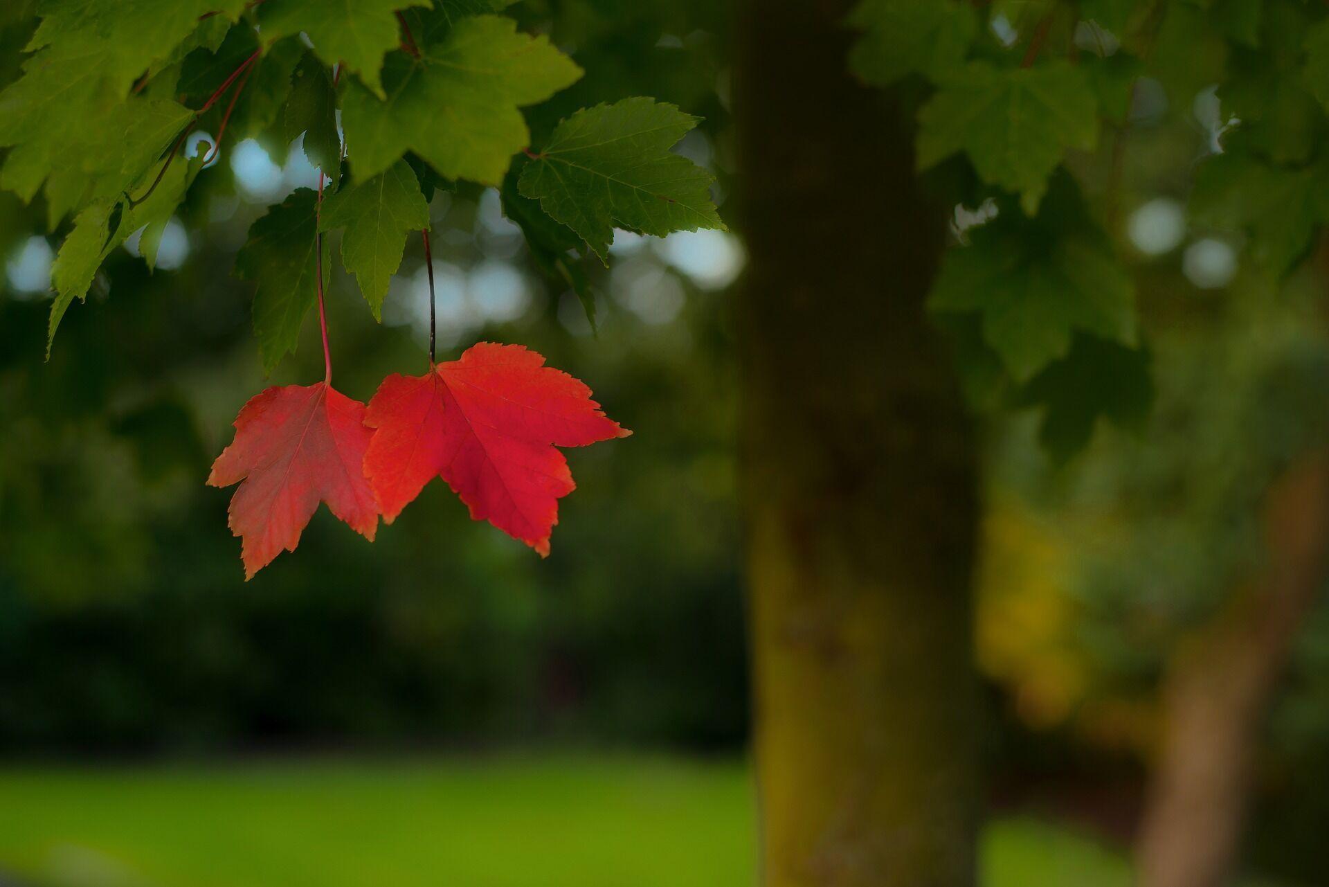 26 вересня в старовину вважалося останнім теплим осіннім днем