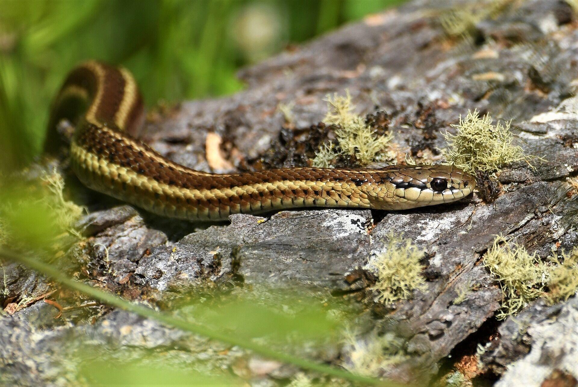 Вважається, що 25 вересня змії сповзаються з полів у ліси
