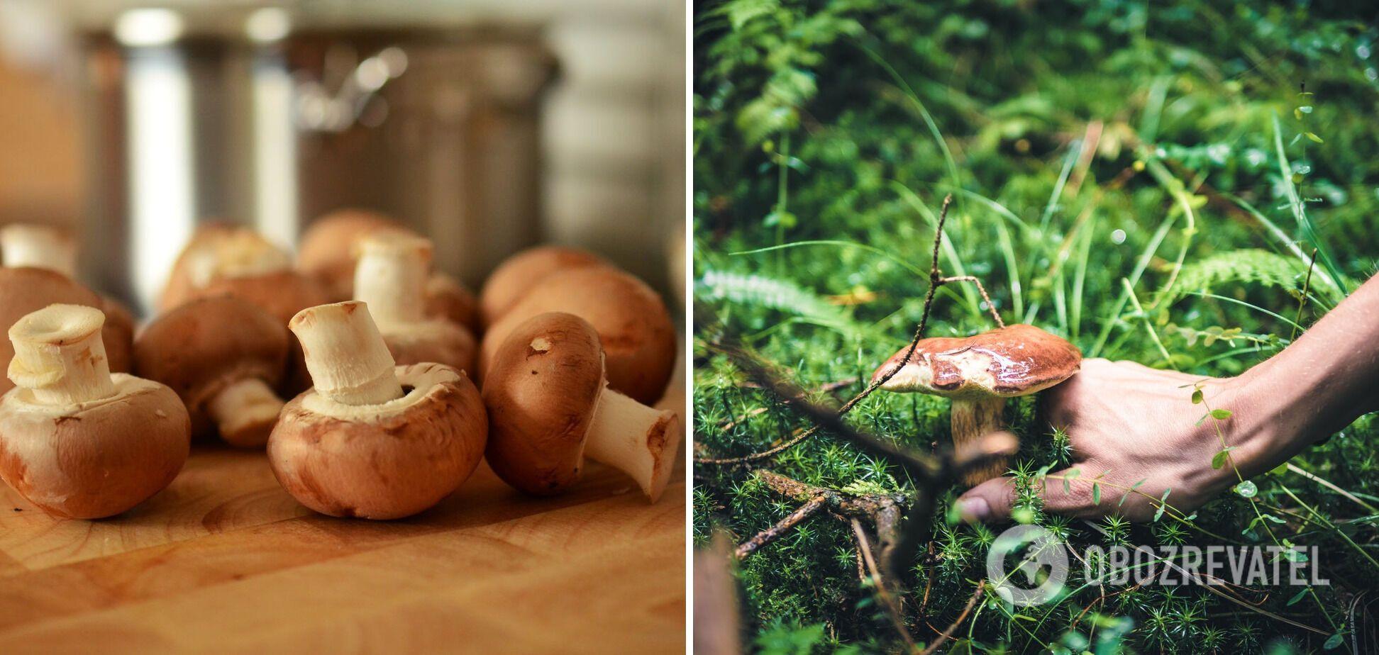 Опасный продукт – лесные грибы