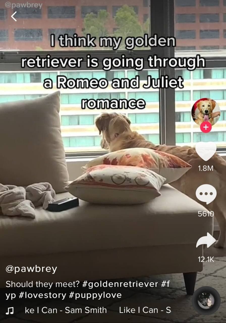 Собака дивиться з квартири на іншу.