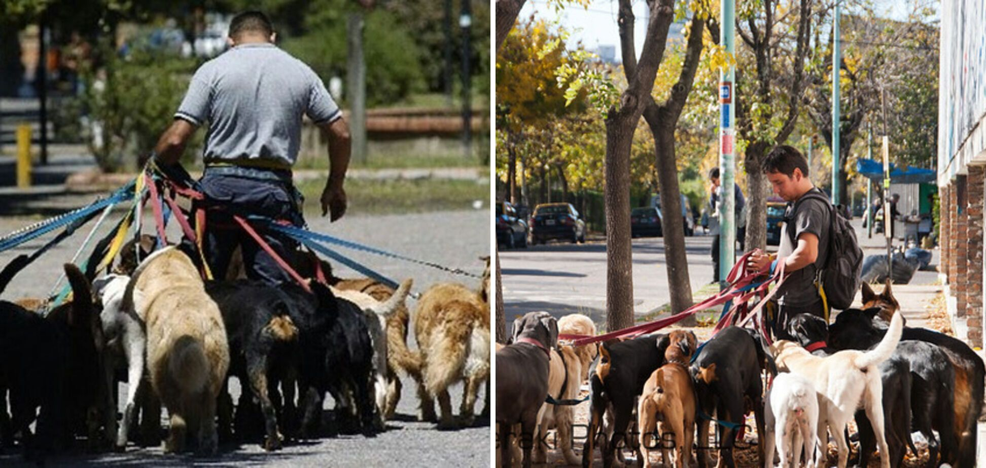 В Аргентине платят деньги за выгул животных.