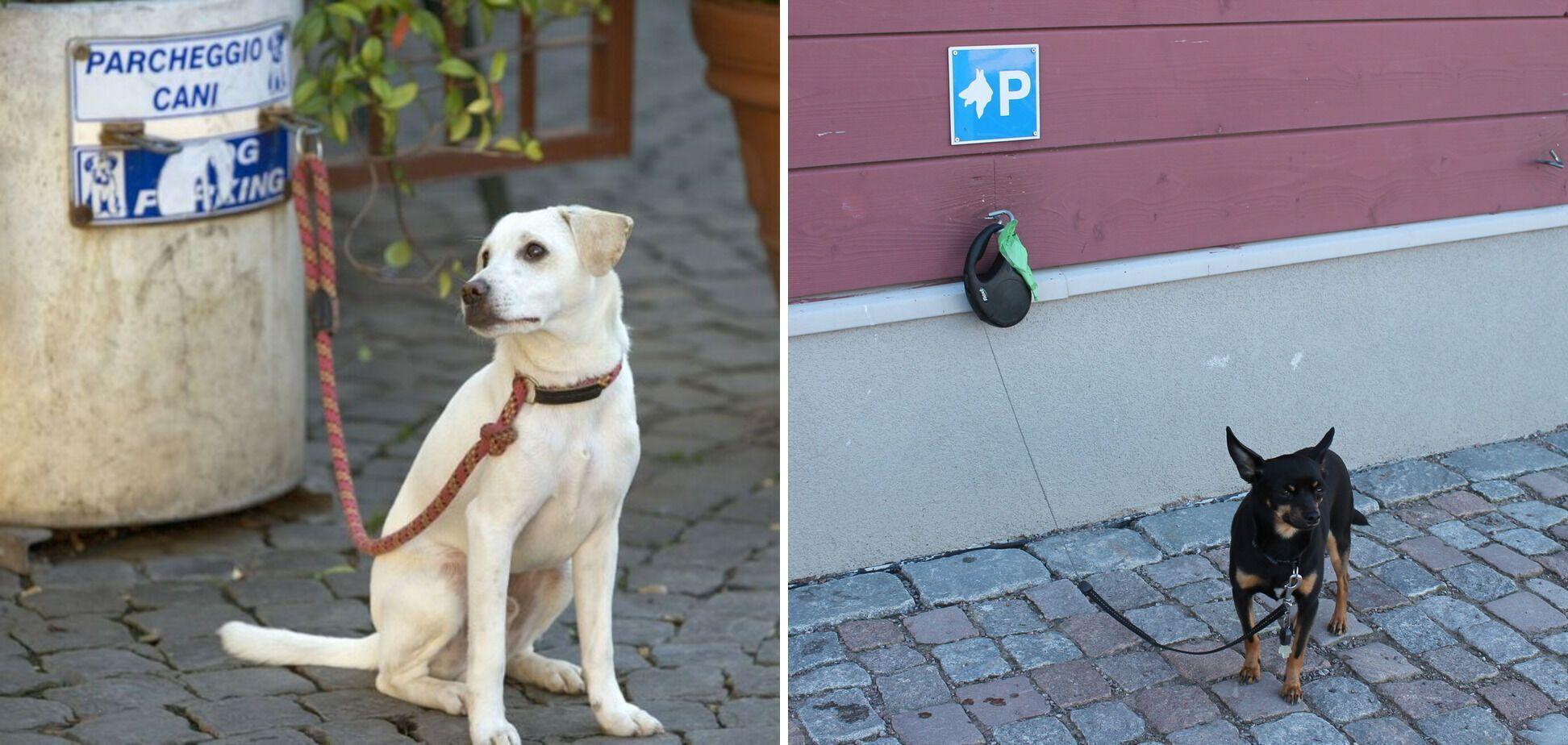 В Италии есть парковки для животных.
