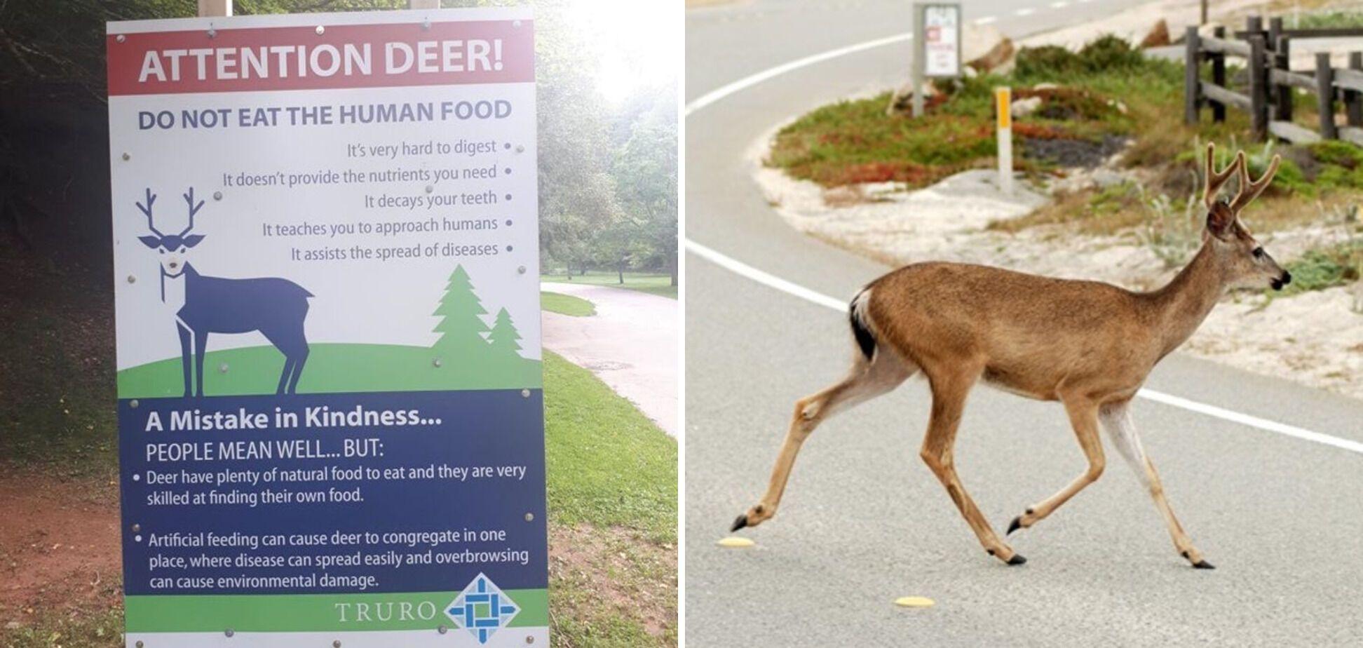 В Канаде есть правила для оленей.