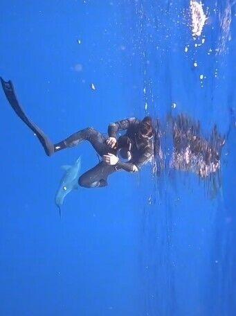 Дельфин спас дайверов