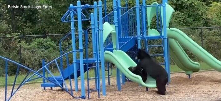 Тварини грають на території школи