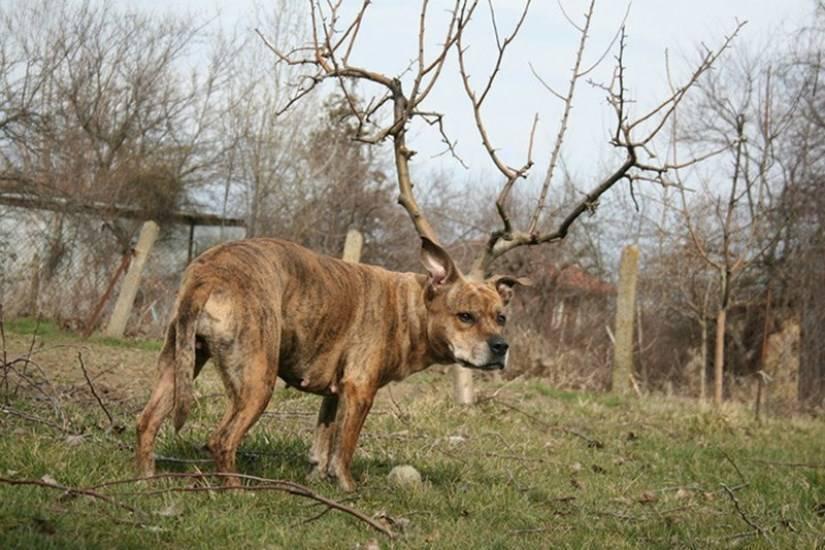 Пес позує біля дерева