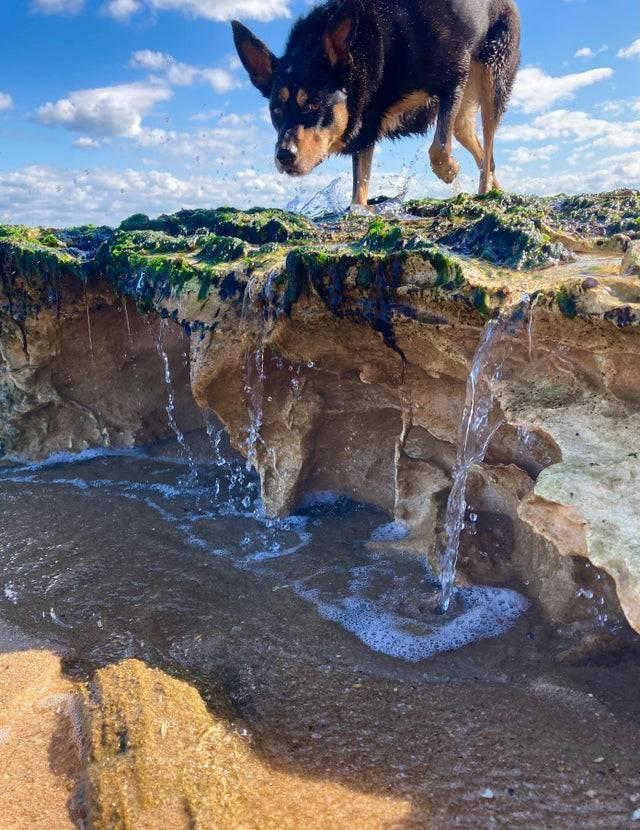 Гіганський пес прийшов прогулятися до водопаду
