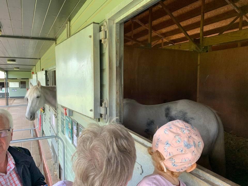 ДІти прийшли подивитися на довжелезного коня