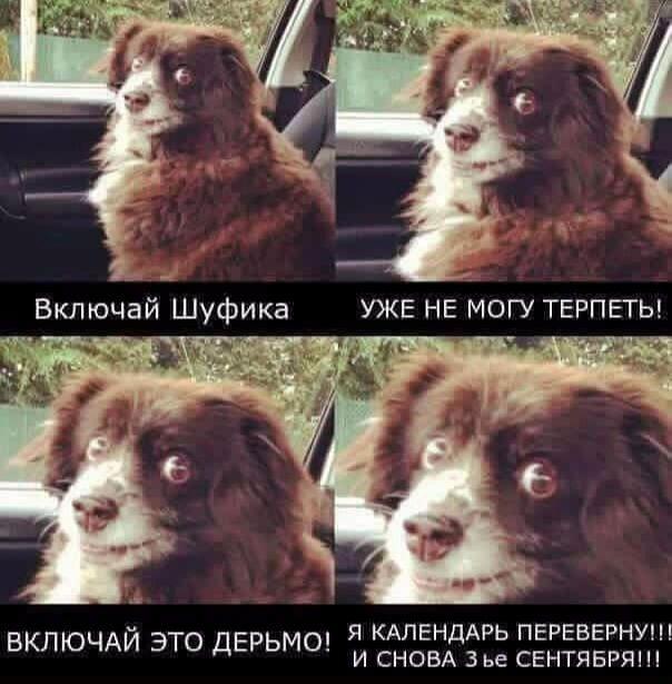 Мем с собакой про 3 сентября