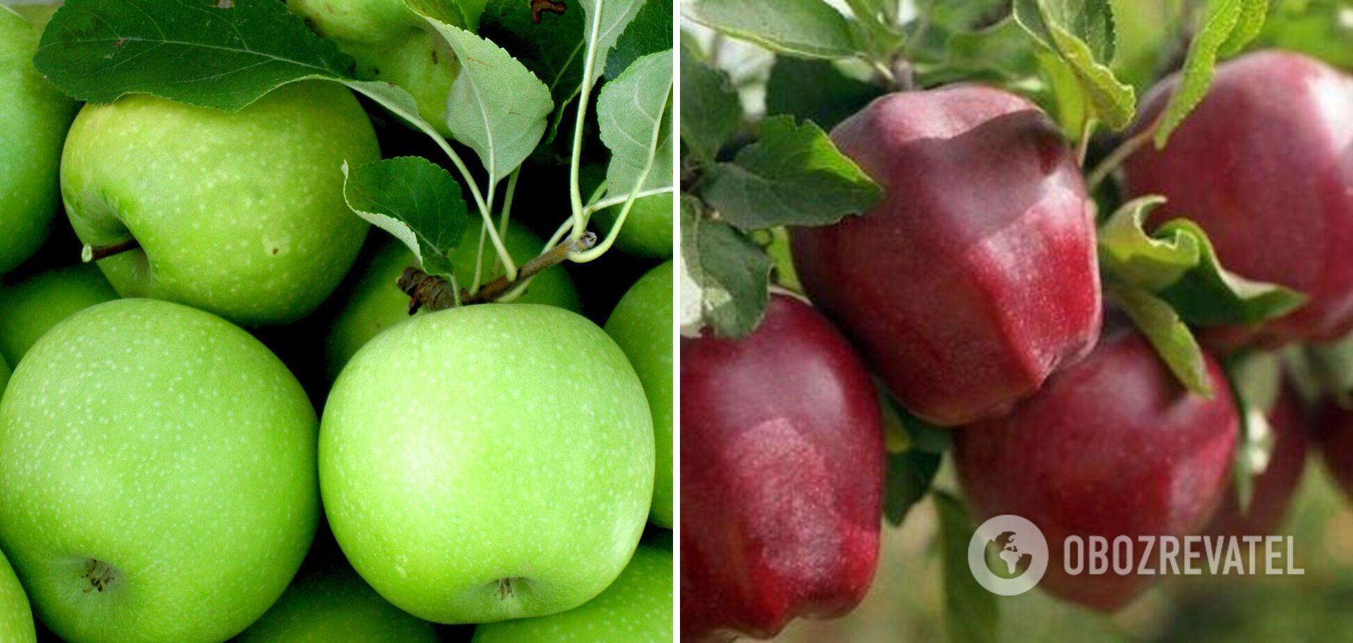 Твердые сорта яблок