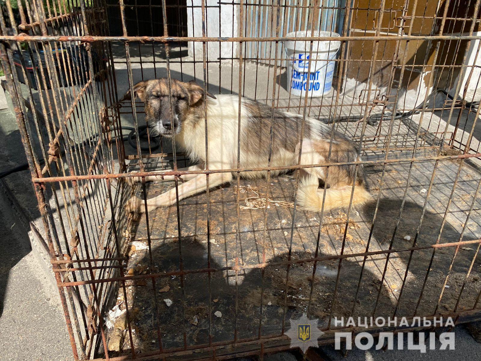 Тварини утримувалися в жахливих умовах.