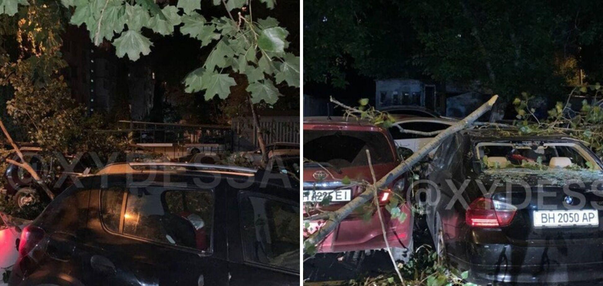 Дерево повредило 8 авто