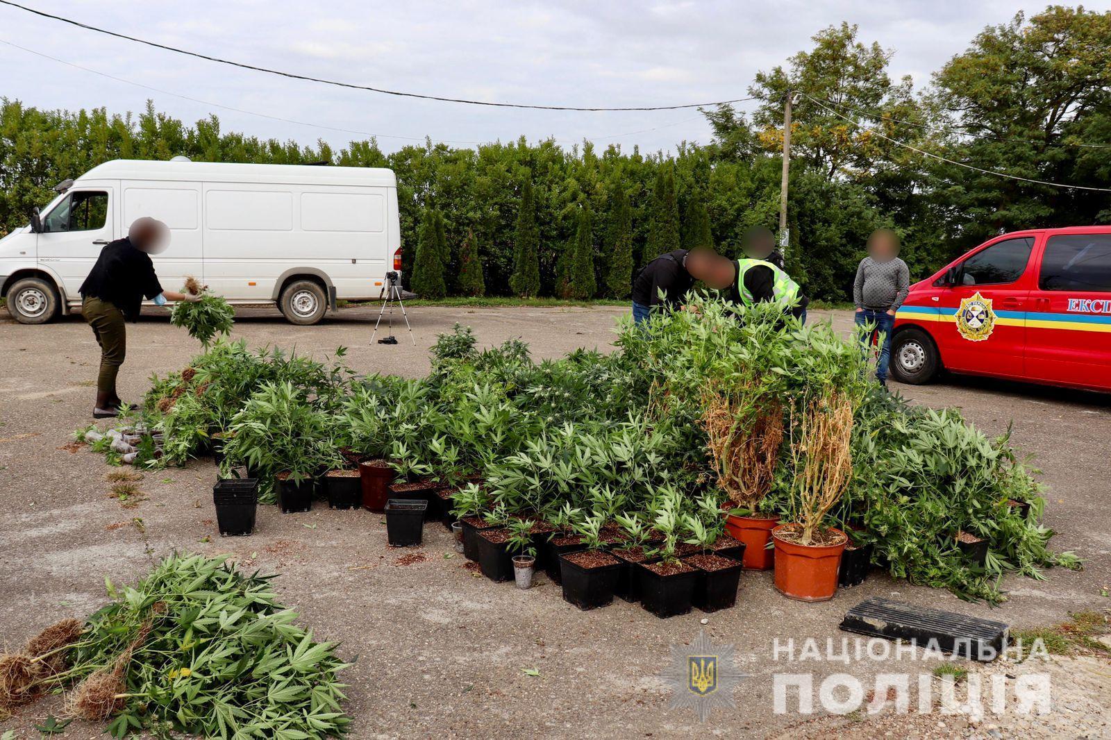 Правоохранители изъяли из тайника 684 стебли конопли