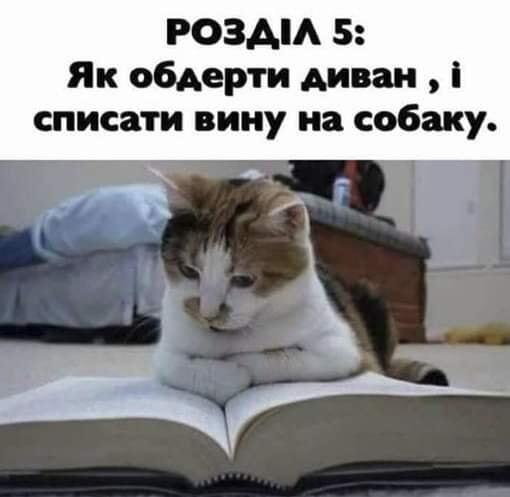 Мем с котом
