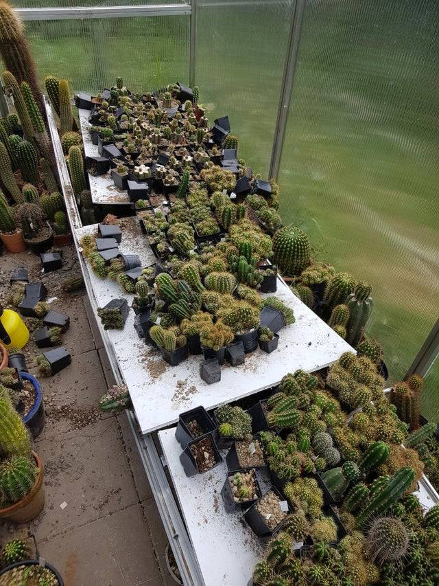 Полиця з кактусами впала і загинули рослини