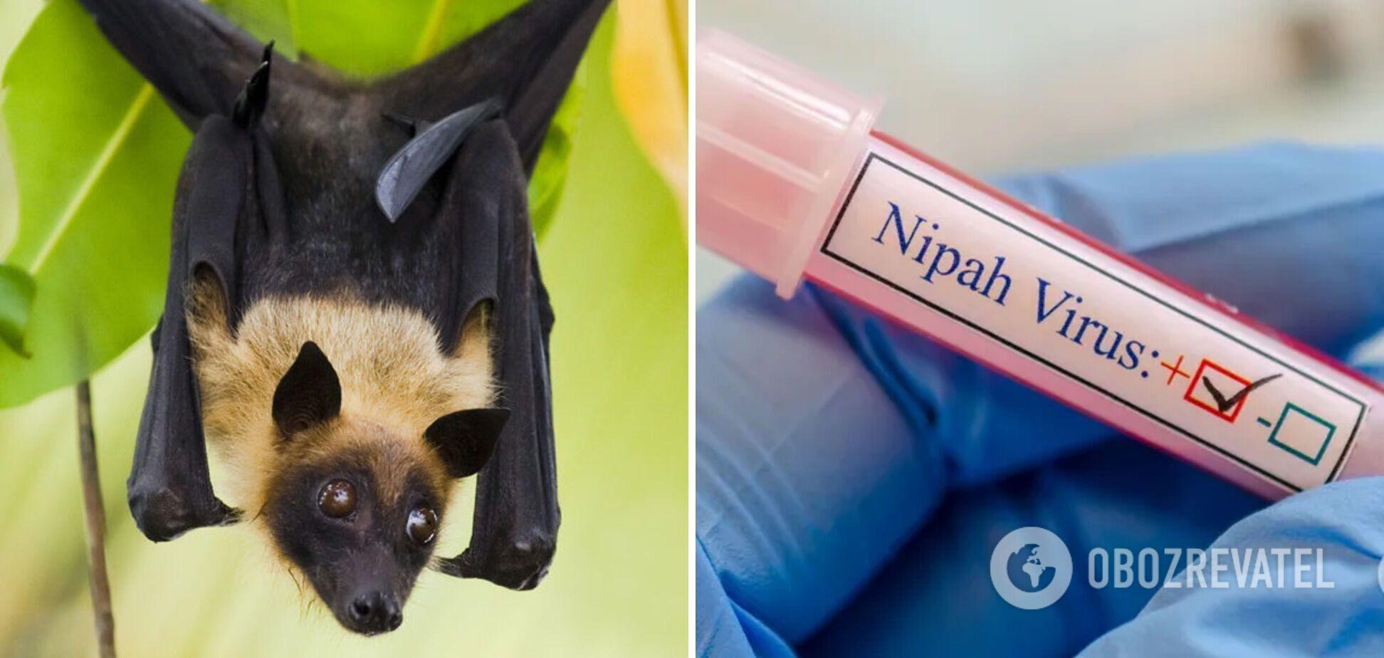 Вірус Nipah розносять крилани