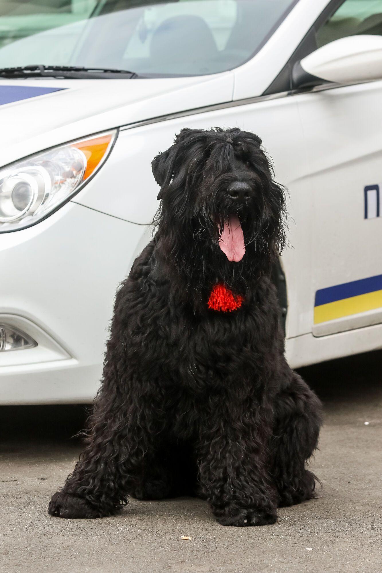 Собака з кличкою Морда