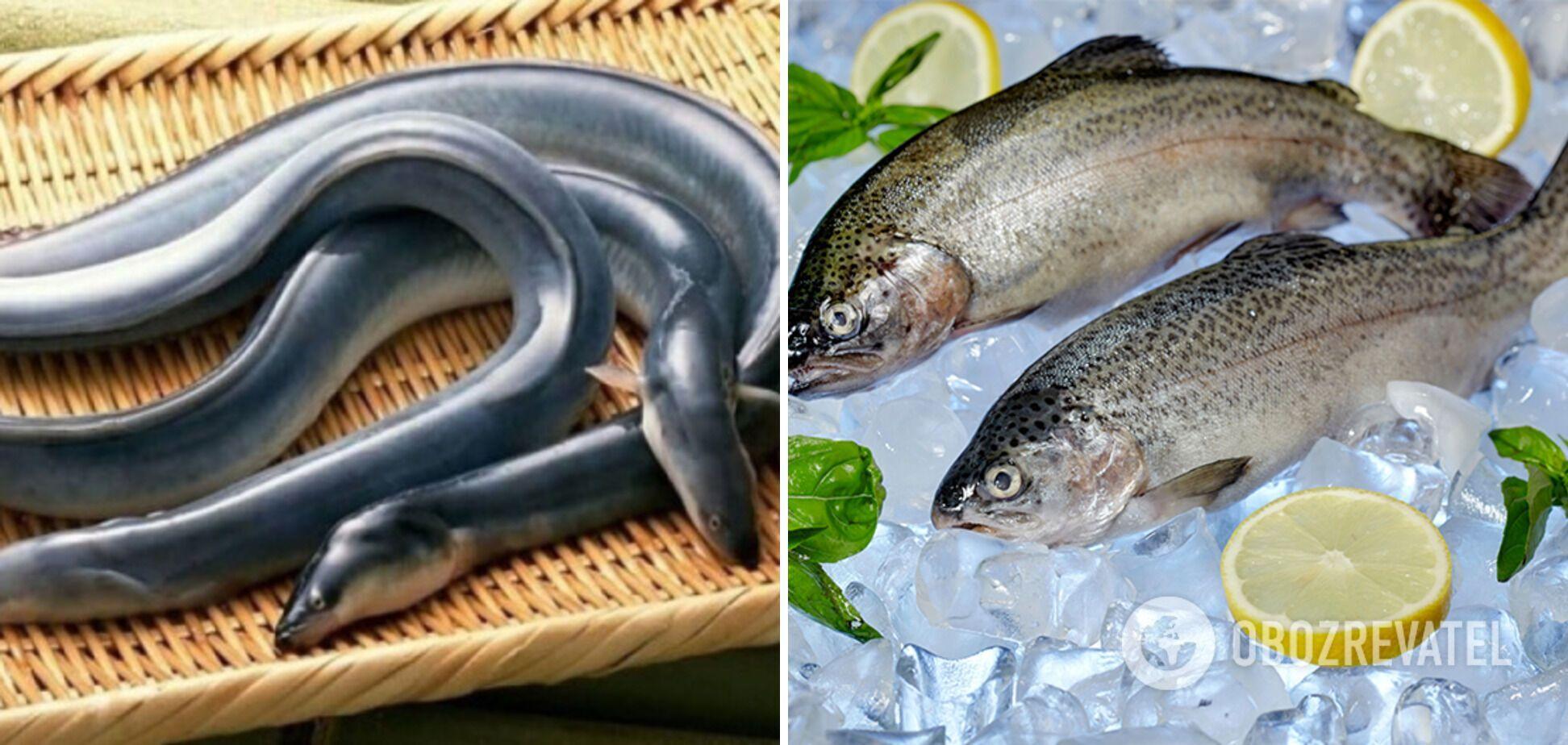 Лучше рыба для суши – угорь и форель