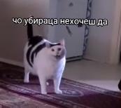 Люди роблять свої версії відео з котом Бендером.