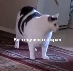 Мем з котом Бендером.