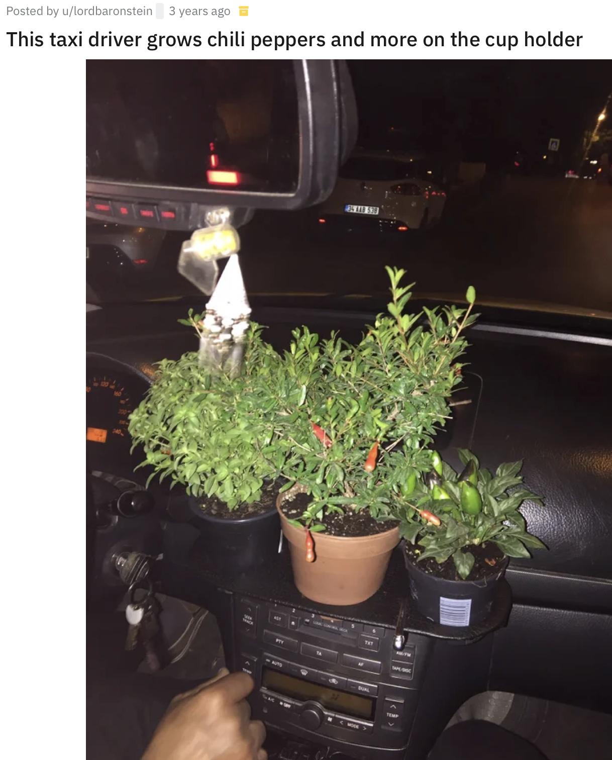 Водій авто обожнює рослини.