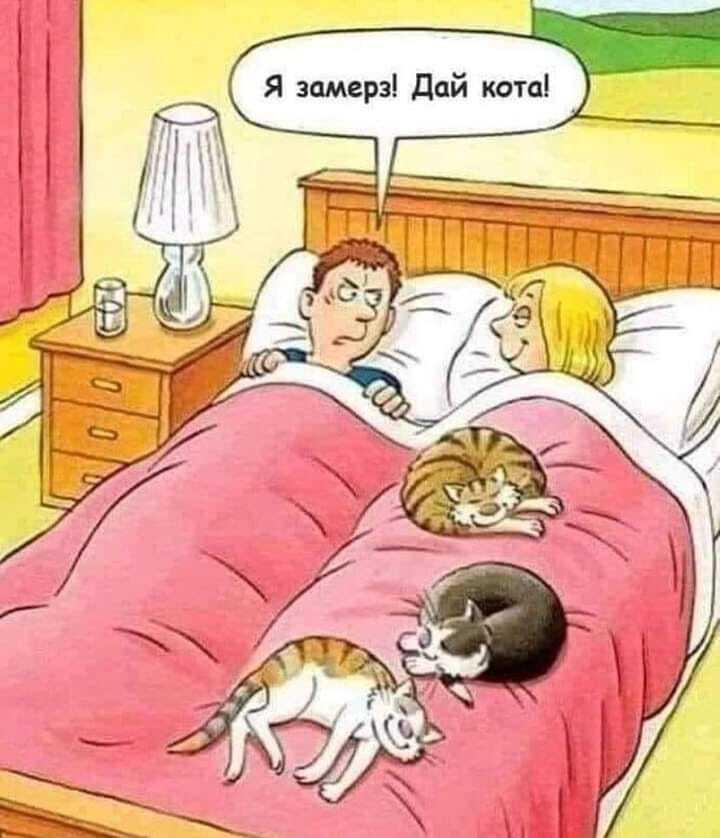 Мем с котами