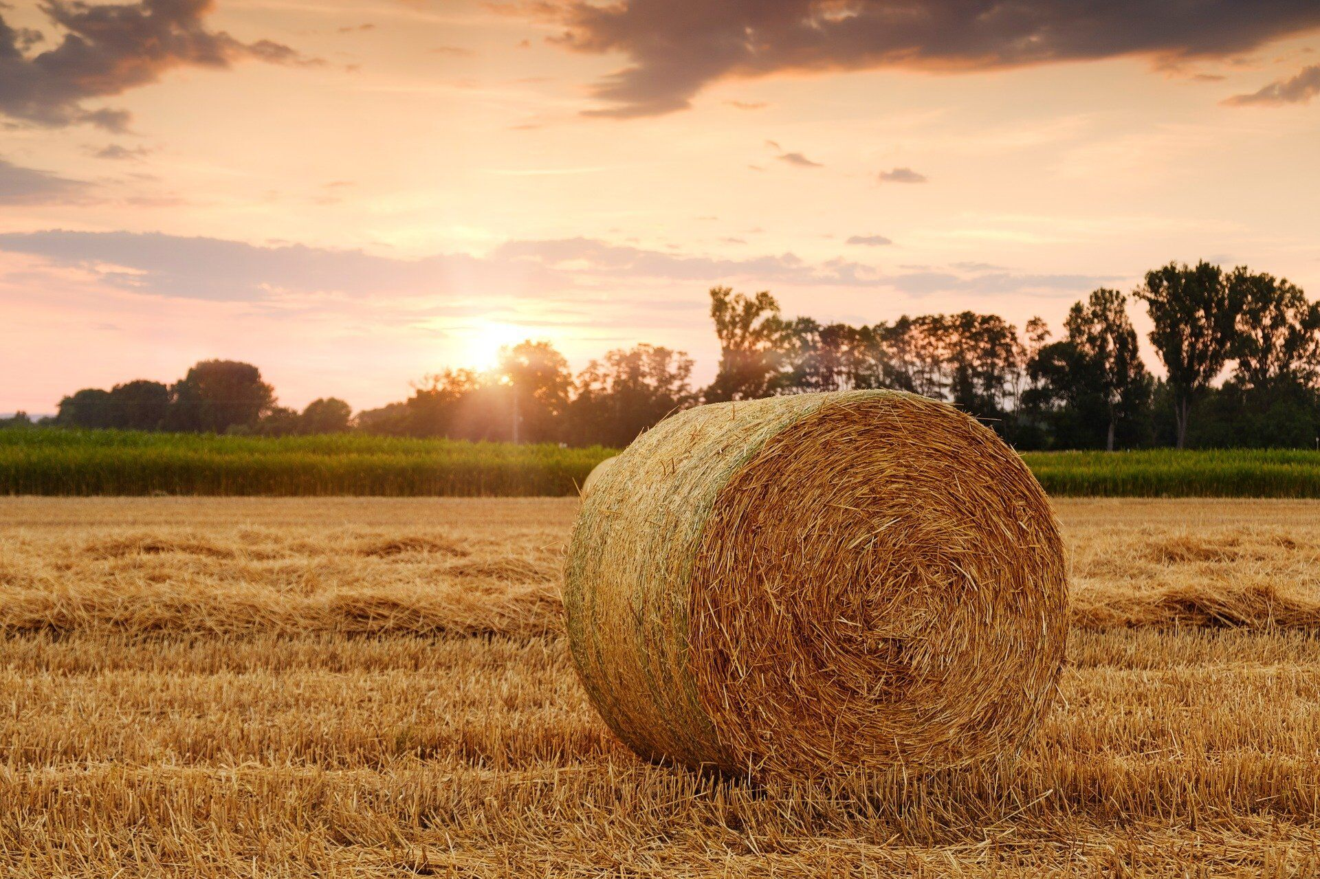 10 вересня зазвичай завершувалися останні жнива хлібів