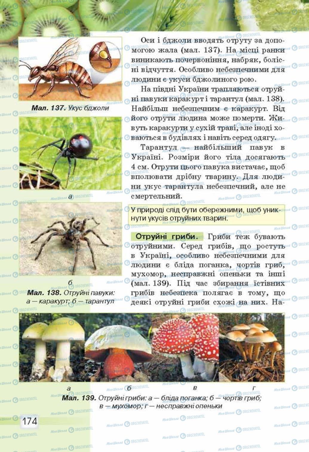 Підручники Природознавство 5 клас сторінка 174