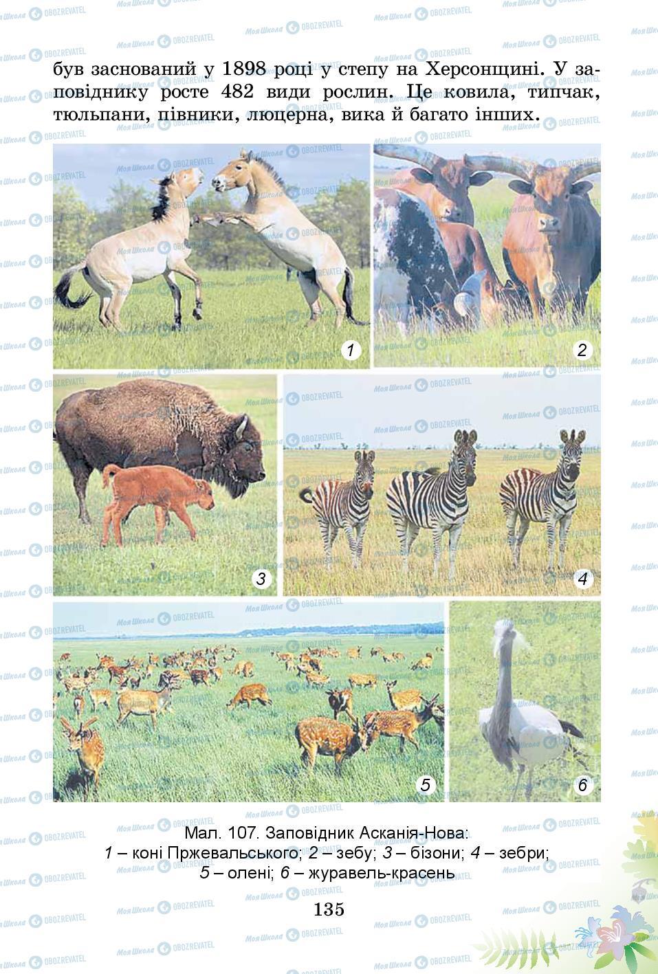Підручники Природознавство 3 клас сторінка 135