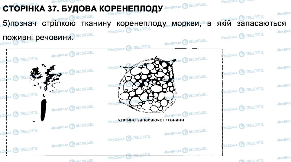 ГДЗ Біологія 6 клас сторінка СТ37