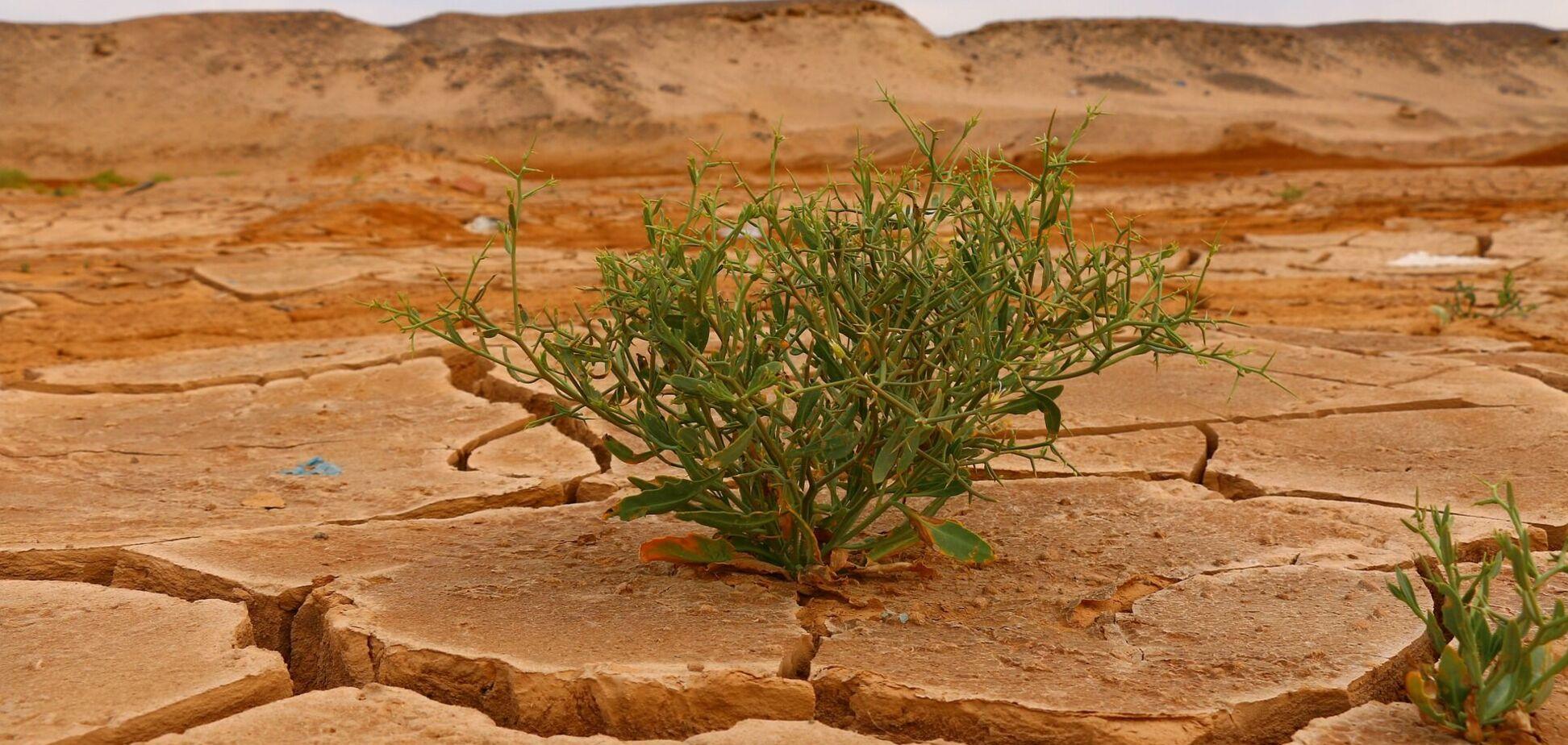 Потрескавшаяся почва пустыни и зеленый росток