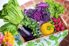 День продовольствия и День здорового питания отмечаются 16 октября