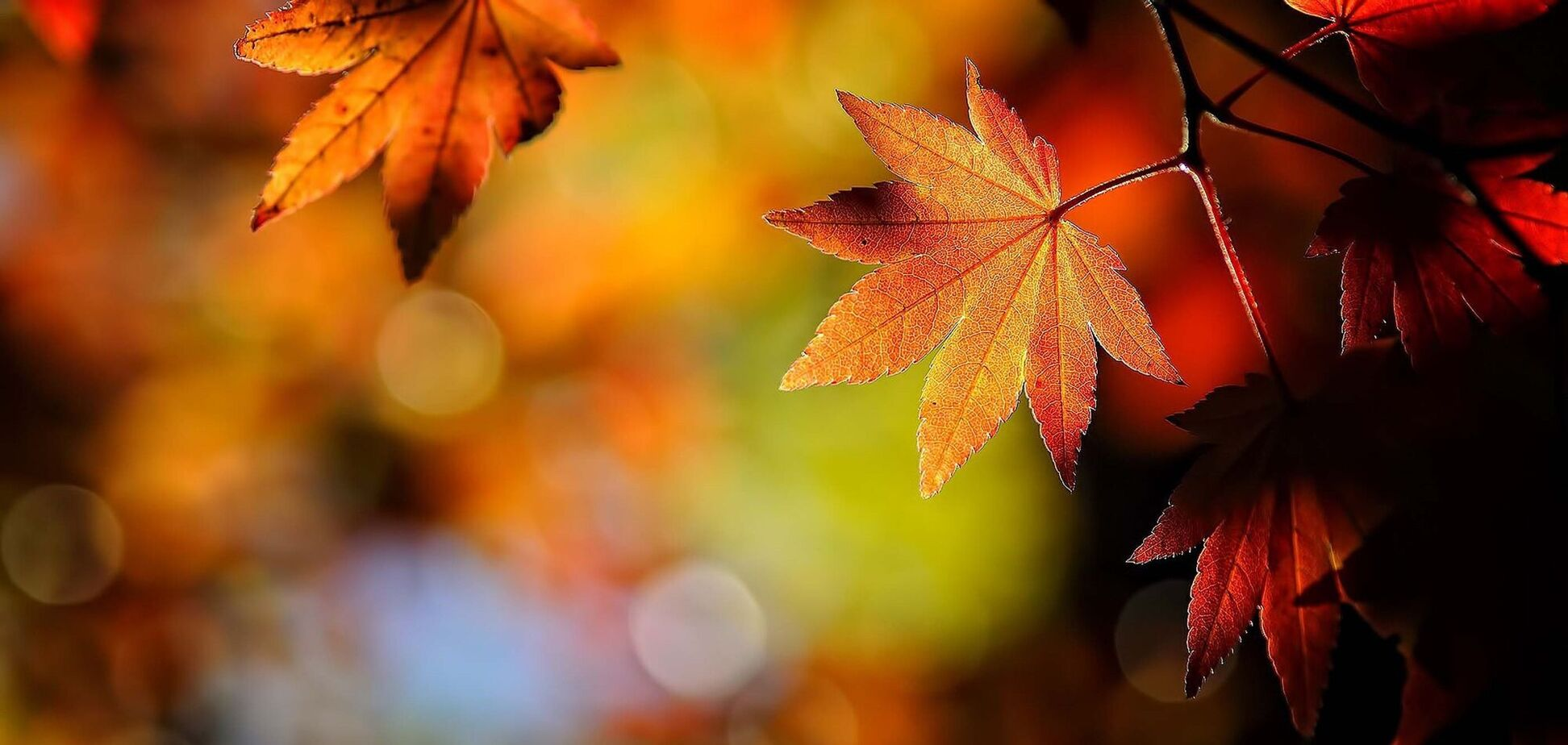 Что отмечают 18 октября: приметы и праздники