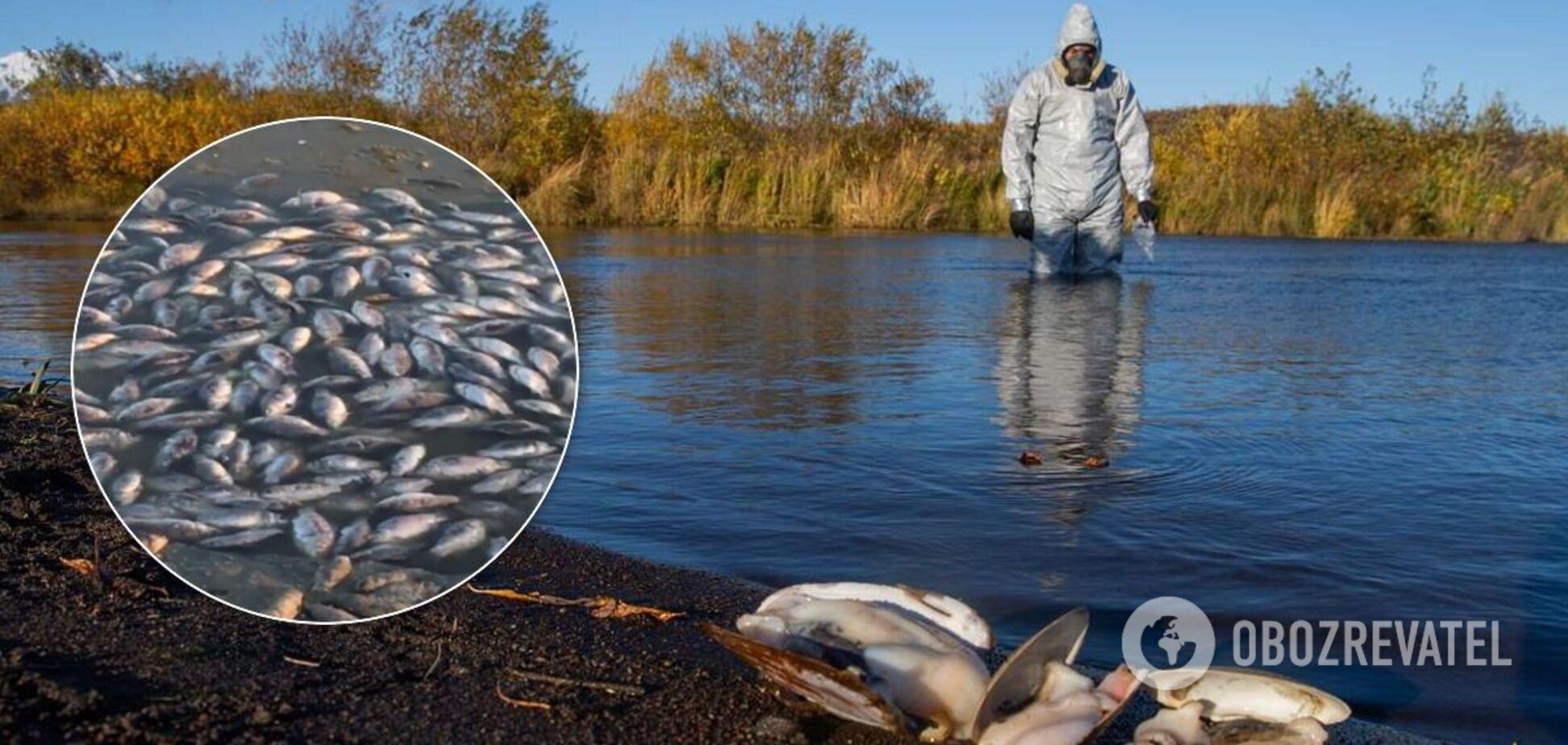 Мор риби в Росії