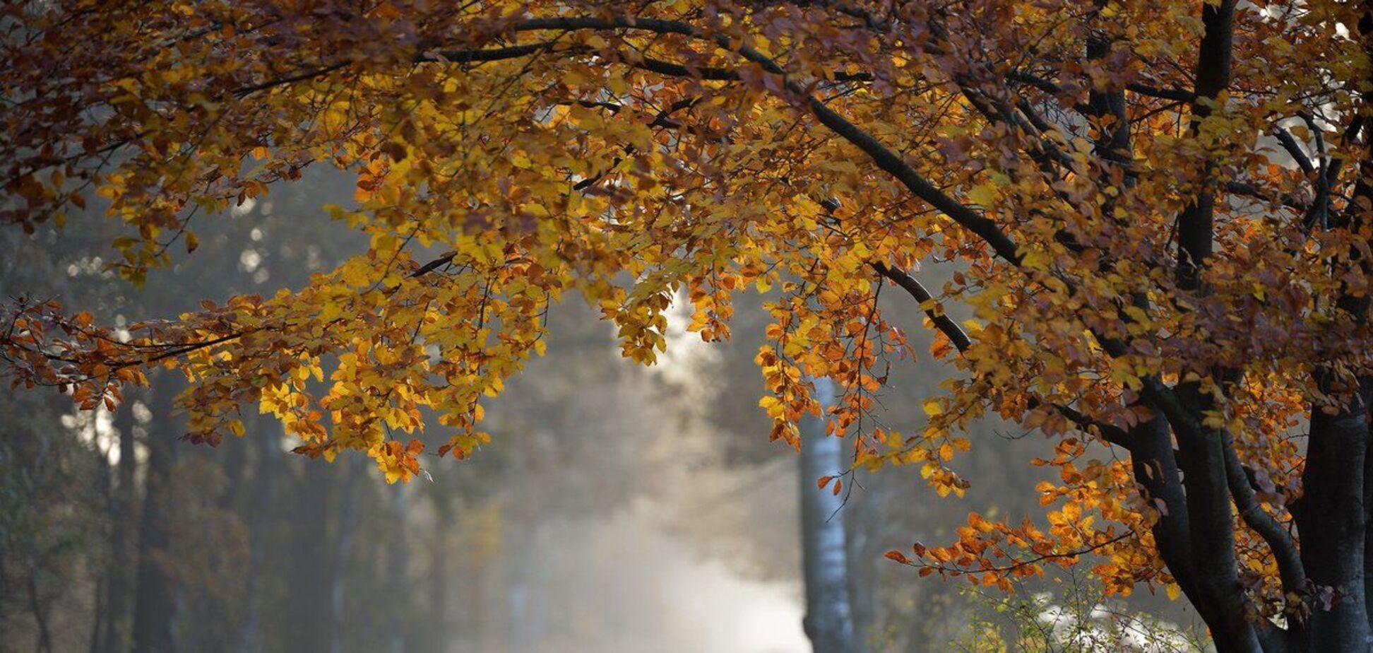 В Днепре спрогнозировали холодную погоду 19 октября