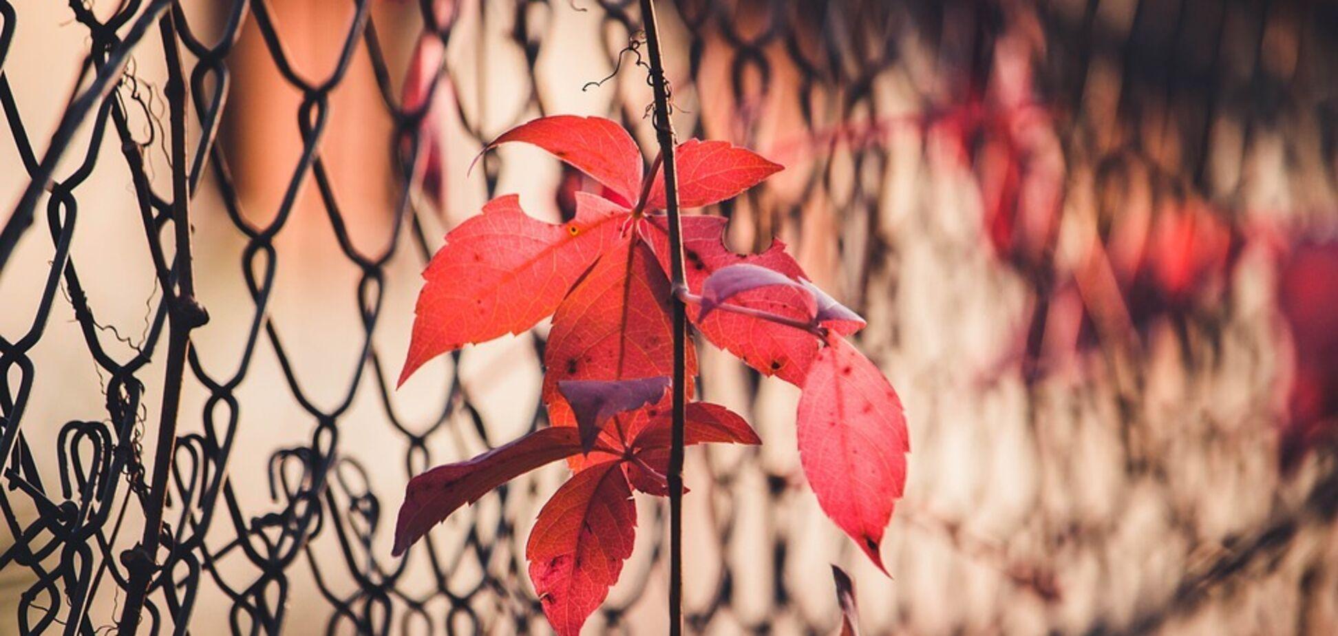 Днем 18 октября в Украине ожидается сухая погода