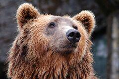 Медведи напали на сотрудника парка в Шанхае
