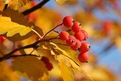 Что отмечают 23 октября: приметы и праздники