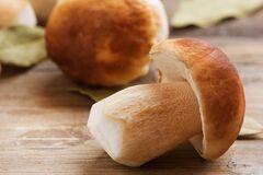 Стало известно, что стоит знать о заморозке грибов