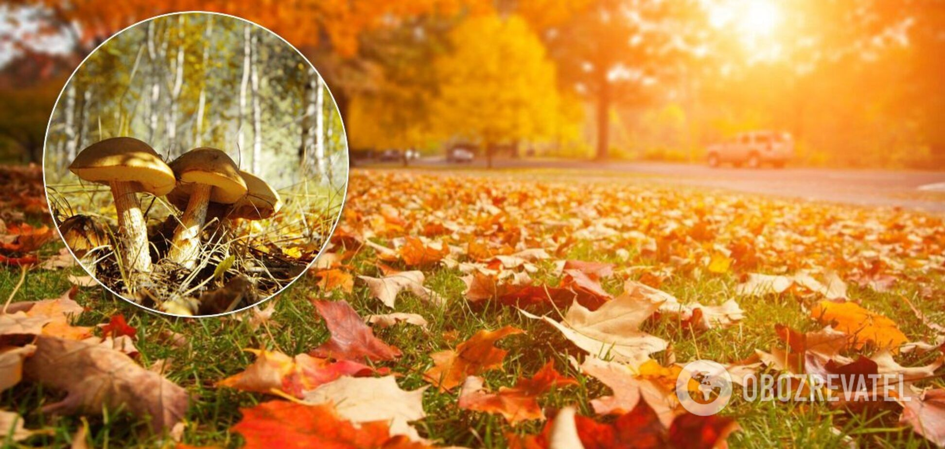 Прогноз погоди на 23 жовтня в Україні