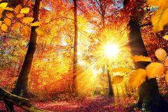 Что отмечают 26 октября: приметы и праздники