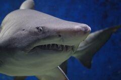 Акула покусала українців в Єгипті