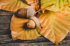 Что отмечают 28 октября: праздники и приметы