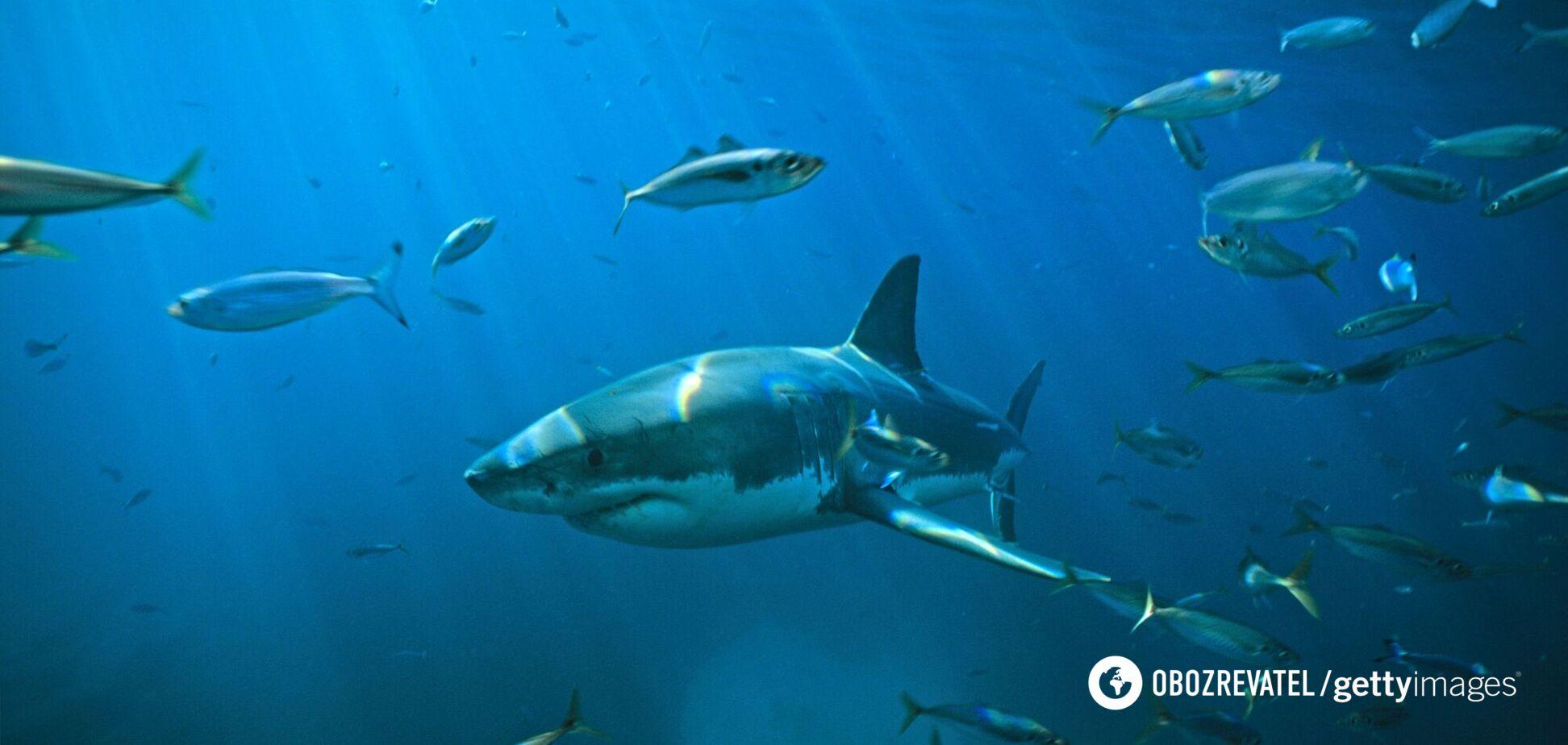 Нападение акулы на украинцев в Египте: появились подробности трагедии