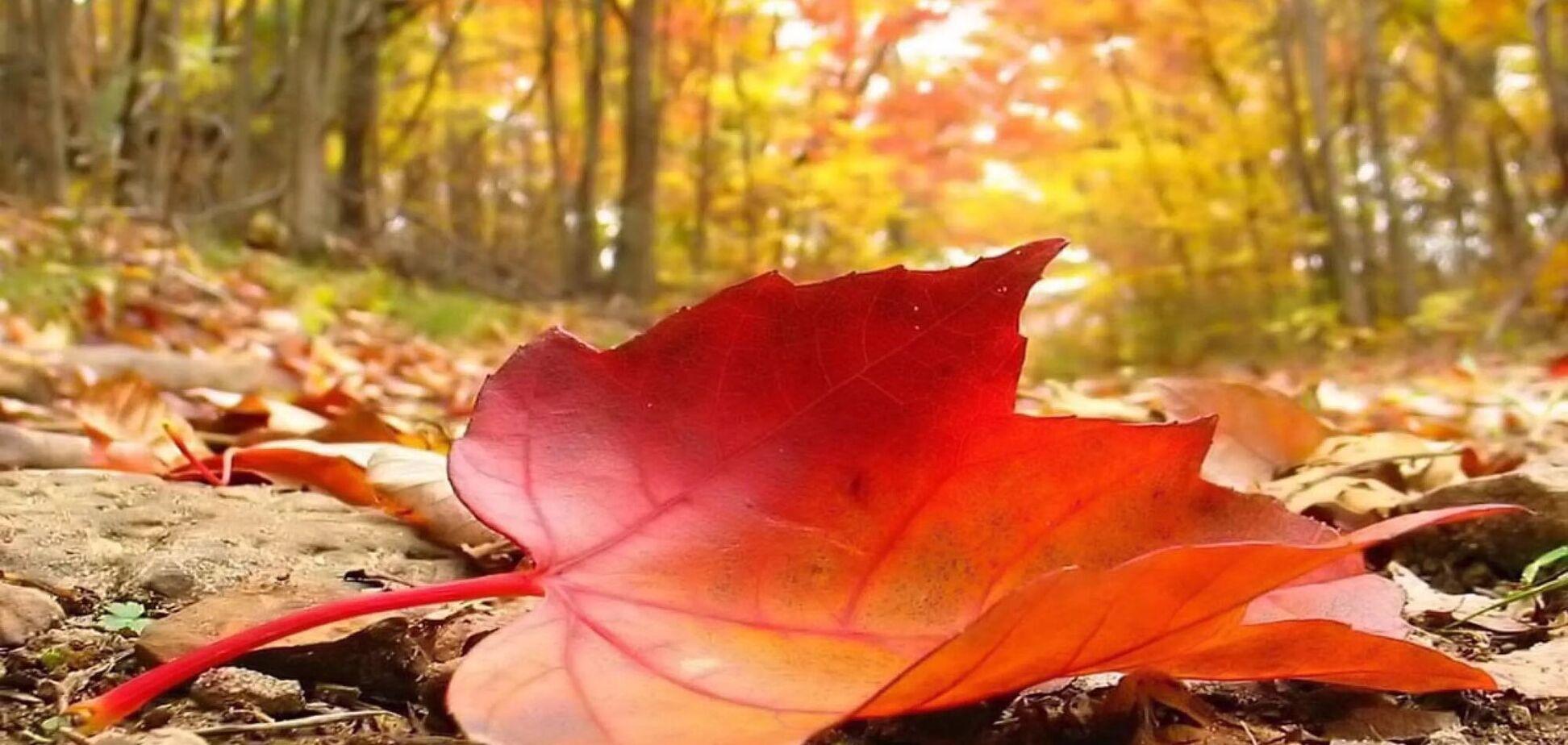 Що відзначають 2 листопада: прикмети і свята