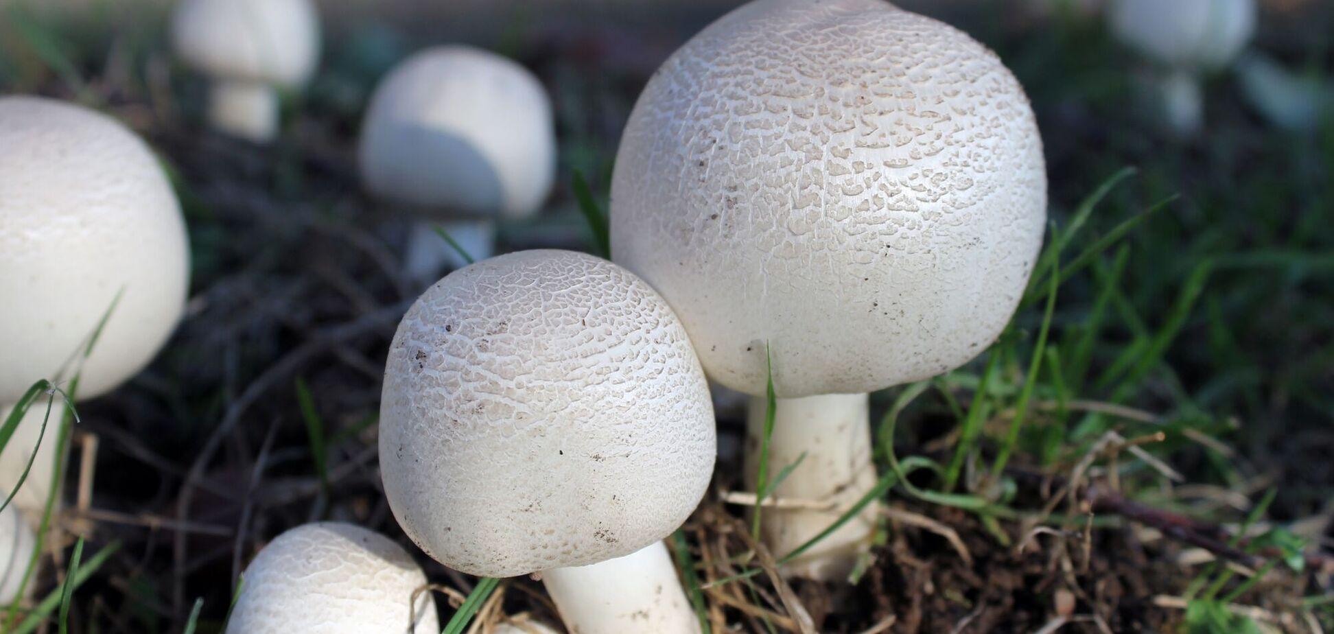 Искусственную кожу создают при помощи физической и химической обработки выращенных грибов