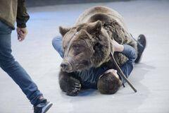 В московском цирке медведь убил человека